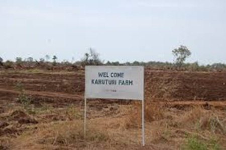 Photo - Karuturi Global farm in Gambella
