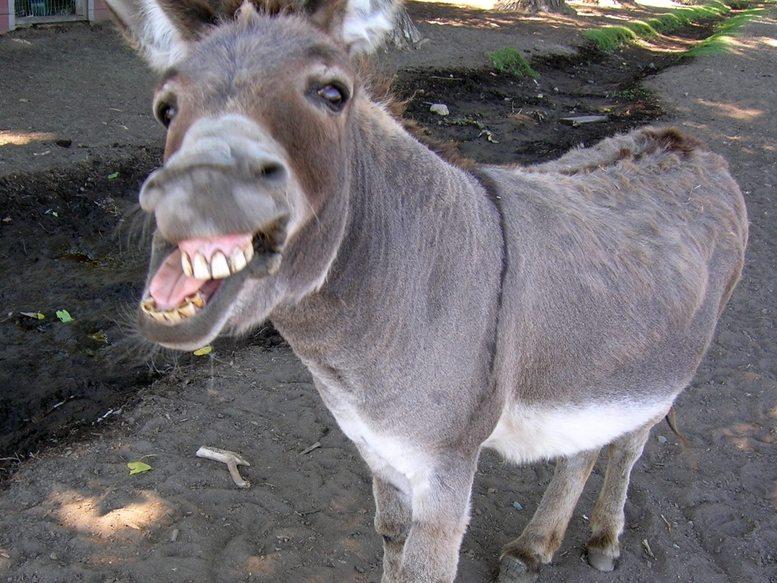 Photo - A donkey