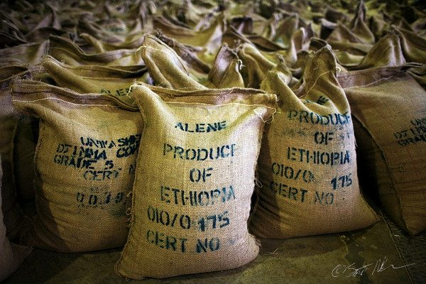 Photo - Ethiopian coffee export in warehouse