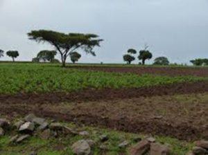 Photo - Rural Ethiopia