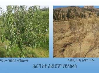 Photo - farmland of Hedrom Haileselasie previous and current