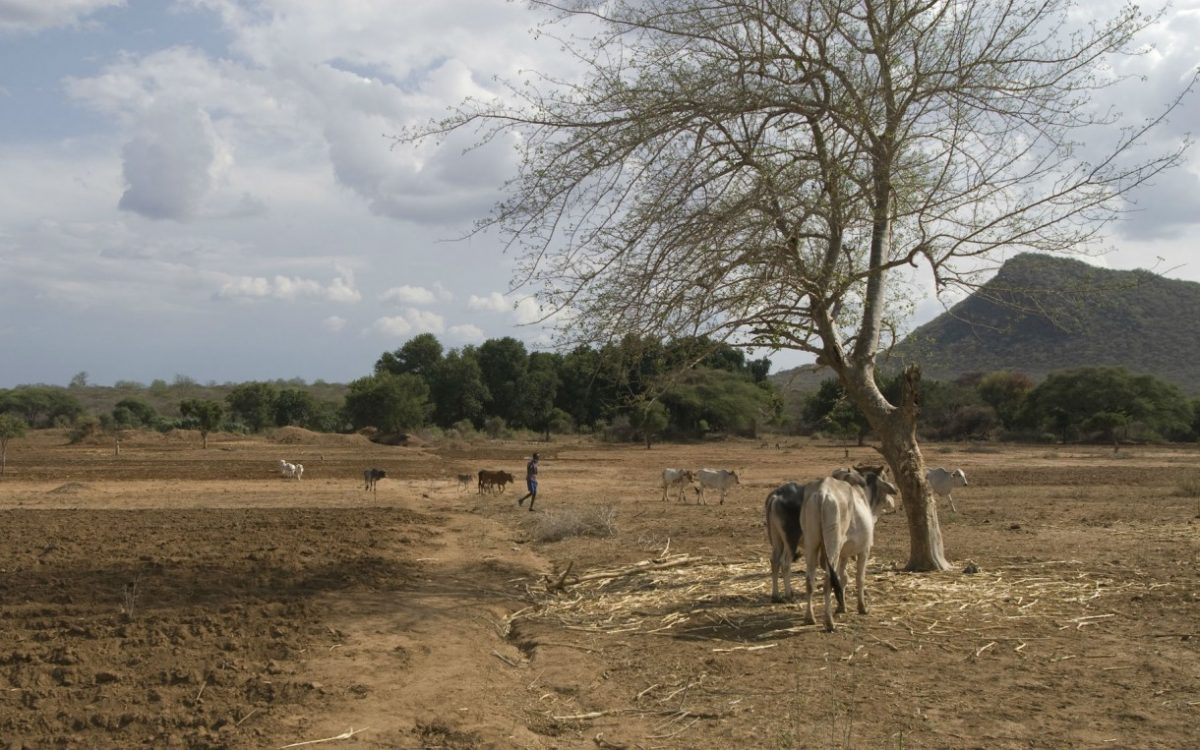 Photo - Landscape in Ethiopia showing the effects of climate change